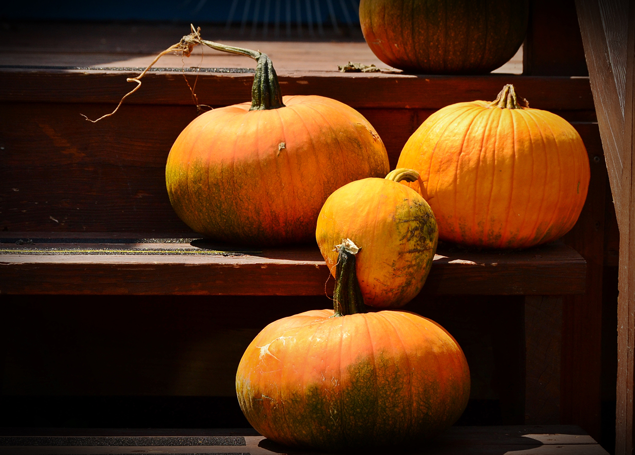 Early Pumpkins in Ontario County (photo)