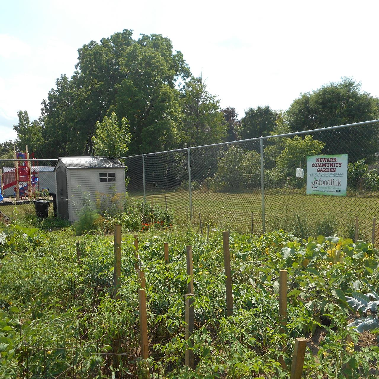 Community Garden is in Bloom in Wayne County (photo)